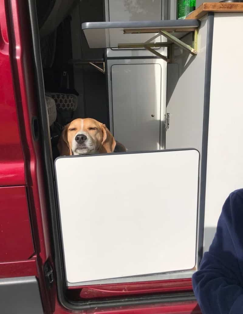 Peugeot Boxer with resident Dog